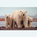 Polar Love - Borduurpakket met telpatroon Orcraphics