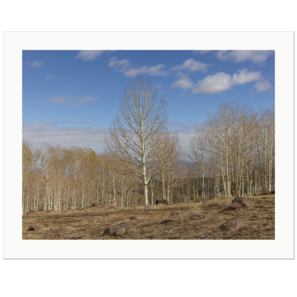 Aspen in Autumn | Highway 12, north of Boulder, Utah, USA 2018 | Edition Print 24   unlimitiert | Bildnummer: IQ180_181025_015-24