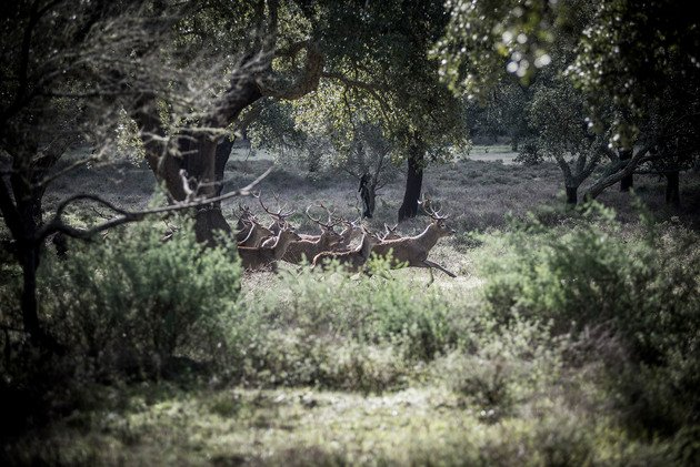A running herd of deer, 2014 | Edition 100, Serie